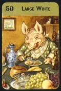 Large White Pig, playing card