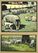 Farmyard scenes featuring sheep