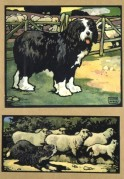 Farmyard scenes with a dog and sheep
