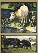 Farmyard scenes with cows and bulls