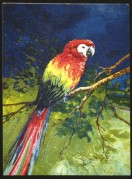 A colour illustration of a parrot