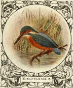 A portfolio illustration of a Kingfisher