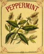 Label for Peppermint drink
