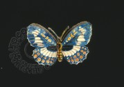 Stylised colour illustration of a butterfly