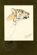 A pastel drawing of a tiger head  depicted with minimal lines and colour