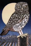 Little Owl, Full Moon