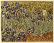 Purple iris in a field
