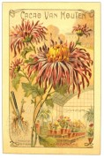 Planting instructions for Chrysanthemums