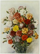 A Bunch of Carnations