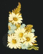 Daisies on a Black Background