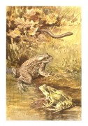 Two frogs with a snake