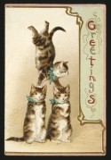 Three cats on a greeting card