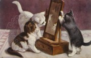 Three kittens playing with a mirror
