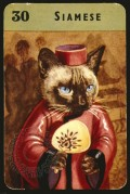 Siamese cat on a playing card
