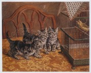 Three kittens watching a caged canary