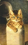 Kitten in a milk churn