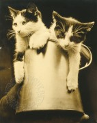 Two kittens in a jug