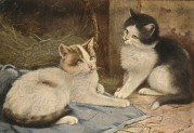 Two cats in a barn