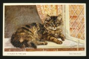 Brown tabby Persian cat on the window sill