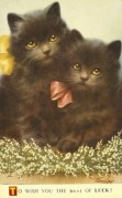 Two black kittens on a Good Luck card