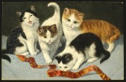 Four cats play with a ribbon