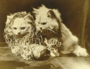 Two white cats tangled up in string