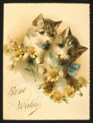 Two kittens on a Best Wishes card