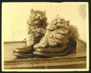 Two cats in shoes