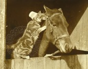 Cat with a horse in its stable