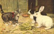 A kitten watching two rabbits eating