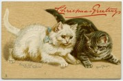 Christmas Greetings for Black and White Kittens