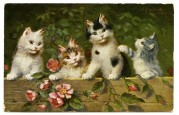Four cats on a garden fence