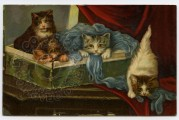 Four cats play with wool