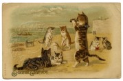 Cats and Kittens on a Beach
