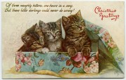 Three Kittens in a Christmas Box