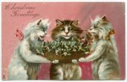 Cats Christmas Greeting Postcard