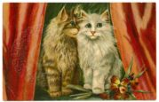 Cats, Flowers and Curtains