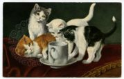 Four Kittens Explore a Cup and Saucer
