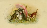 Cats with an Umbrella