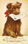 Dog with envelope on a Good Luck card