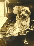 A chauffered dog
