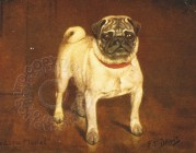 Colour illustration of a Pug dog