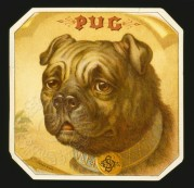 Beer mat featuring a Pug