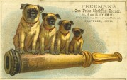 USA clothing advert featuring Pugs on a cannon barrel