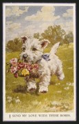 White Scottie with a bunch of roses