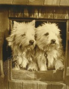 Two puppys in a barn