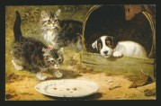 A puppy watches two kittens carefully