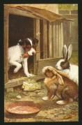 A puppy brings a carrot for two rabbits