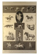 Photography poster depicting the movements of animals