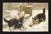 Three kittens on a Christmas Card